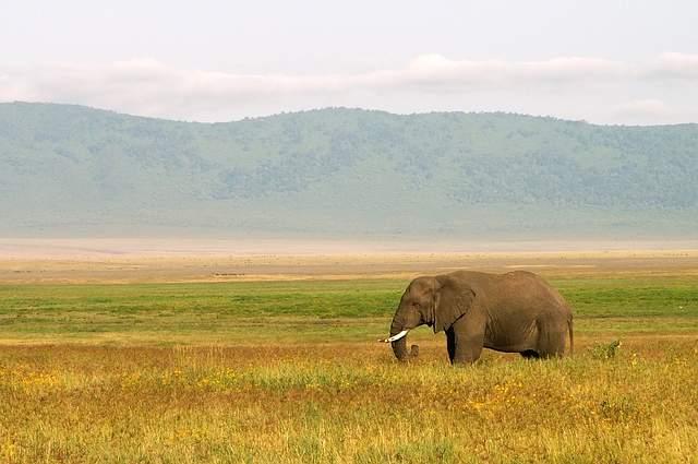 Elefante paesaggio Tanzania