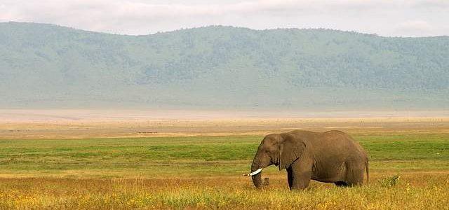 Tanzania e Zanzibar viaggio ricco di avventura