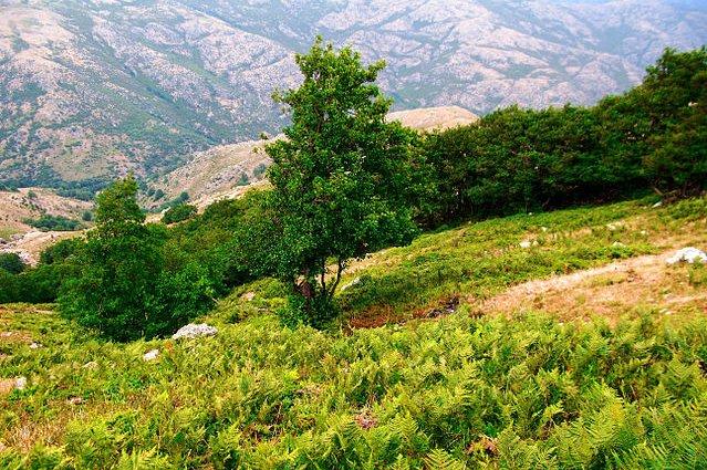 Massiccio del Gennargentu, la più montuosa regione sarda